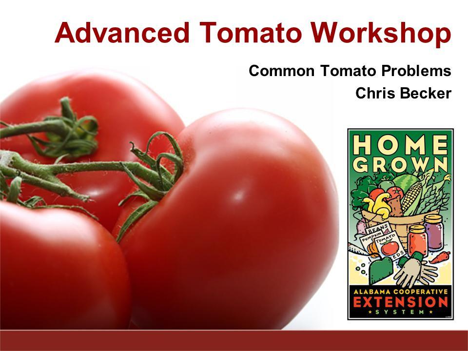 Advanced Tomato Workshop Common Tomato Problems Chris Becker