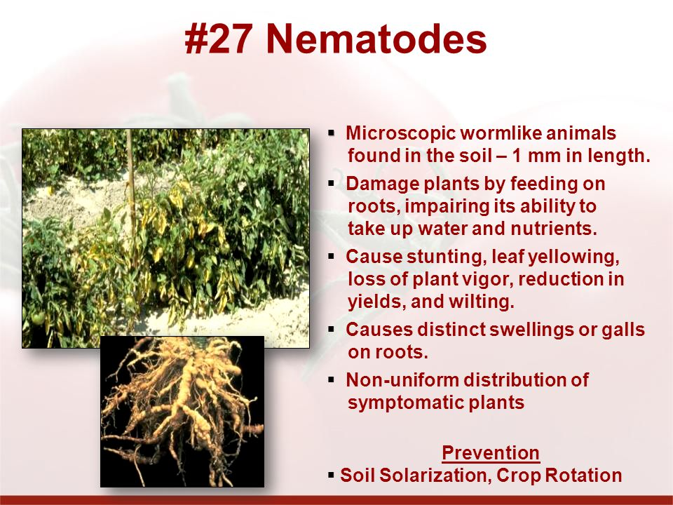 #27 Nematodes Microscopic wormlike animals found in the soil – 1 mm in length.