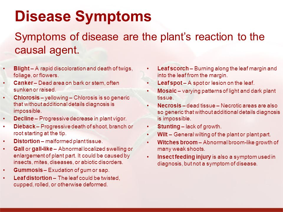 Disease Symptoms Blight – A rapid discoloration and death of twigs, foliage, or flowers.