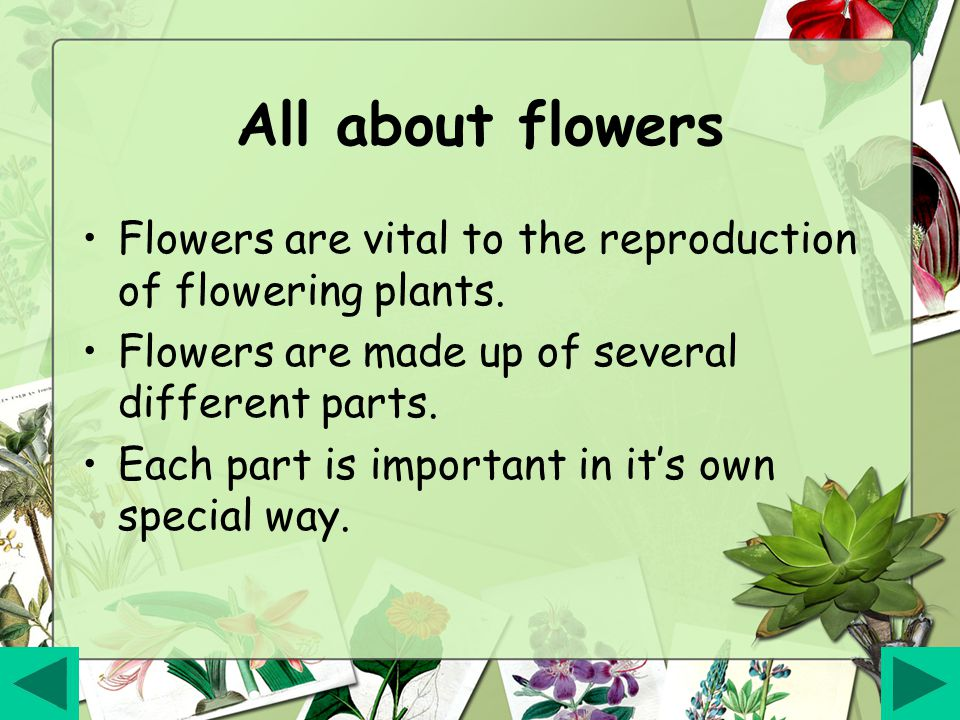 All about flowers Flowers are vital to the reproduction of flowering plants.