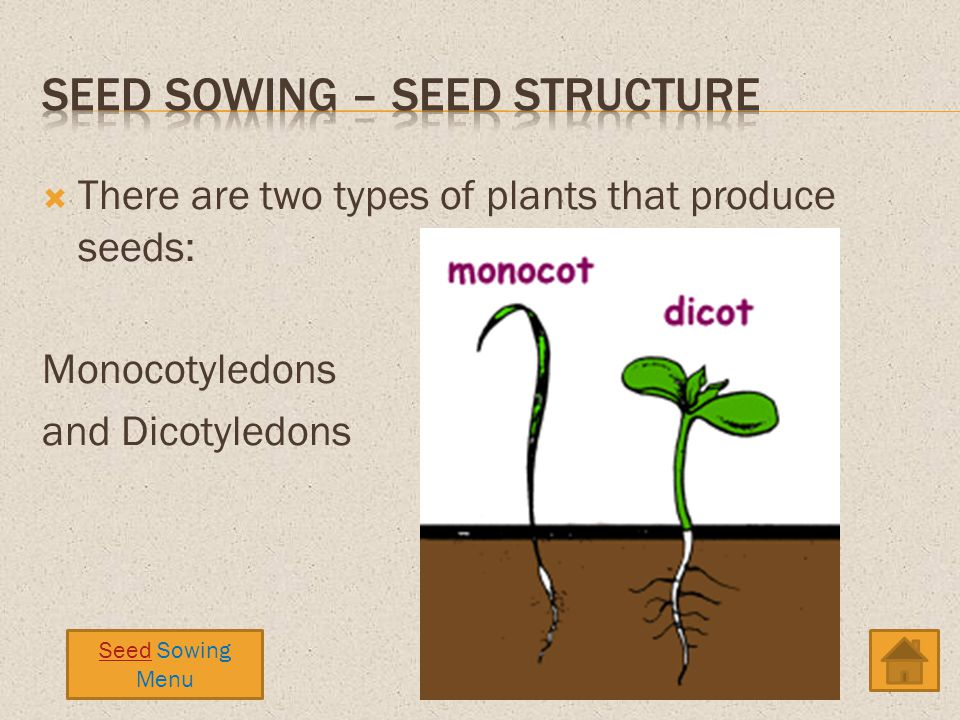There are two types of plants that produce seeds: Monocotyledons and Dicotyledons Seed Sowing Menu