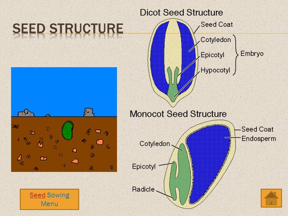 Seed Sowing Menu