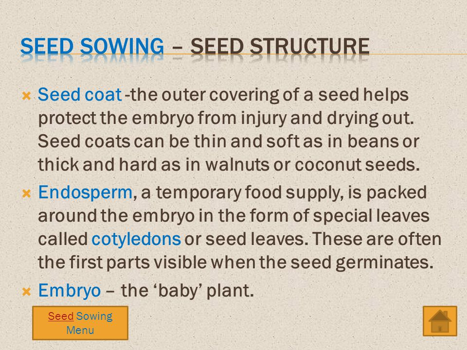 Seed coat -the outer covering of a seed helps protect the embryo from injury and drying out. Seed coats can be thin and soft as in beans or thick and