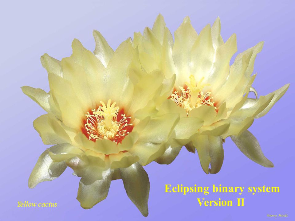 Eclipsing binary system Version I Yellow roses