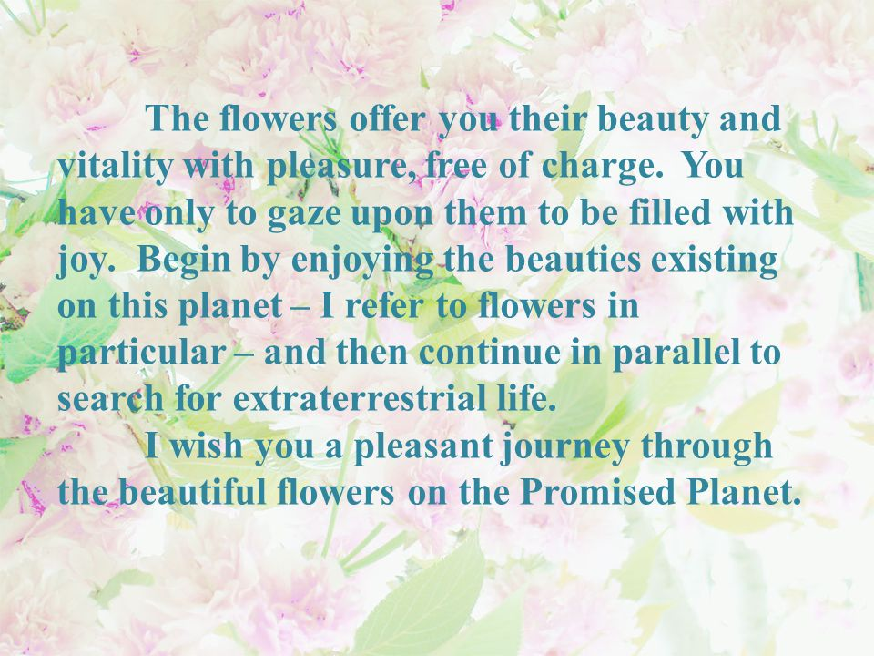 The flowers offer you their beauty and vitality with pleasure, free of charge.