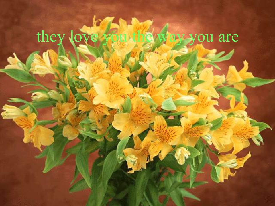 they love you the way you are