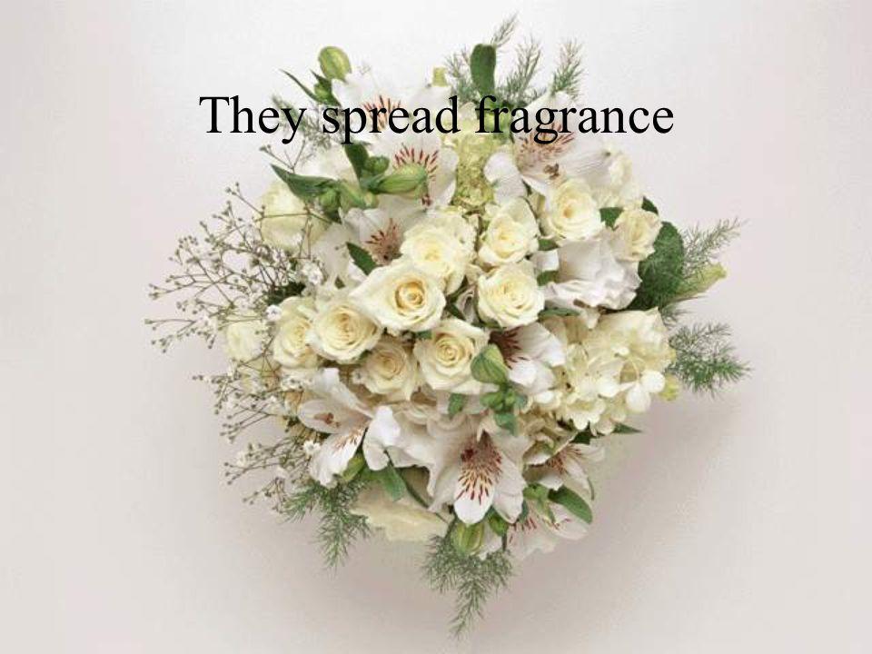 They spread fragrance