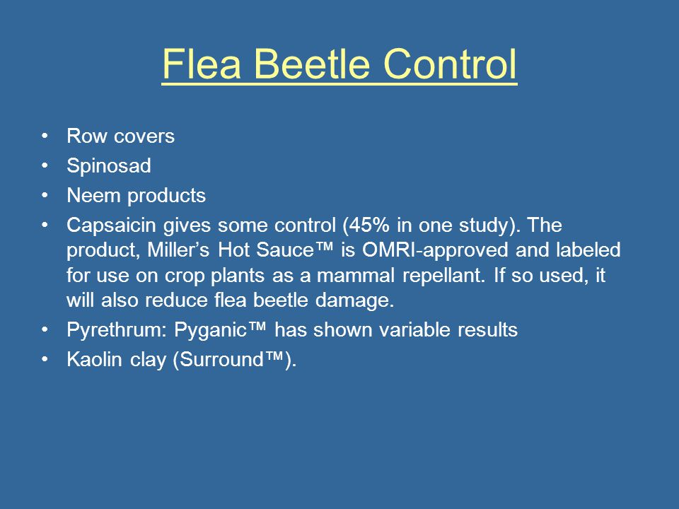 Flea Beetle Control Row covers Spinosad Neem products Capsaicin gives some control (45% in one study). The product, Millers Hot Sauce is OMRI-approved