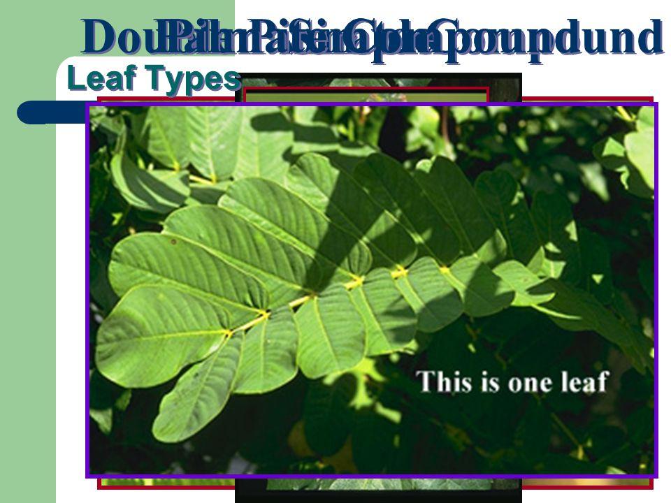 Double Pinnate Compound Palmate Compound Simple Leaf Types Pinnate Compound