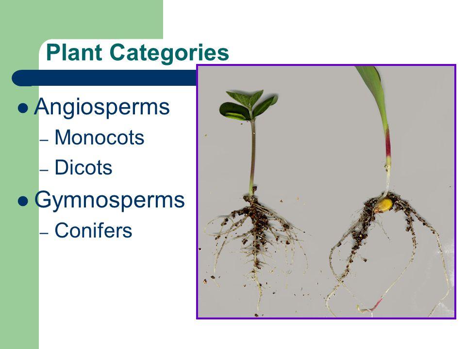 Plant Categories Angiosperms – Monocots – Dicots Gymnosperms – Conifers