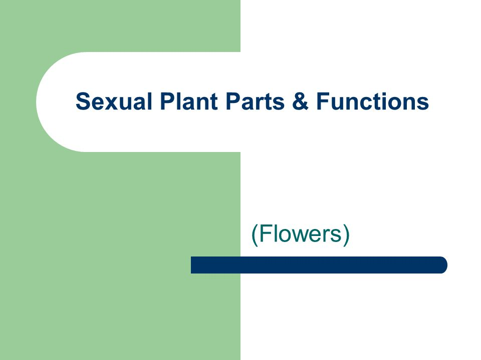 Sexual Plant Parts & Functions (Flowers)