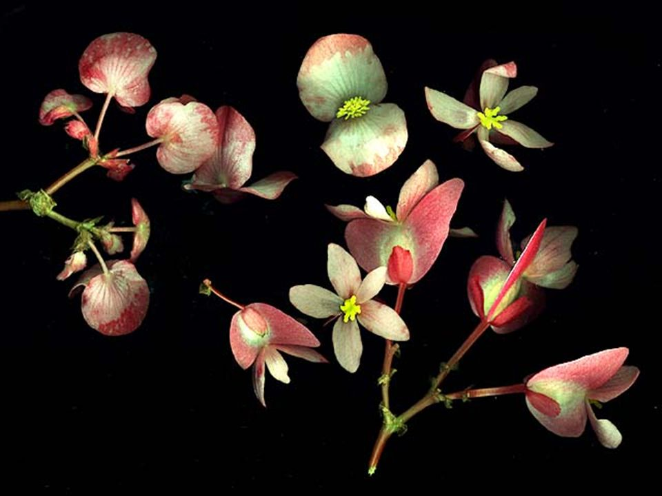 Types of Flowering Plants Monoecious = 1 House – Corn – Pecan Dioecious = 2 Houses – Holly – Junipers
