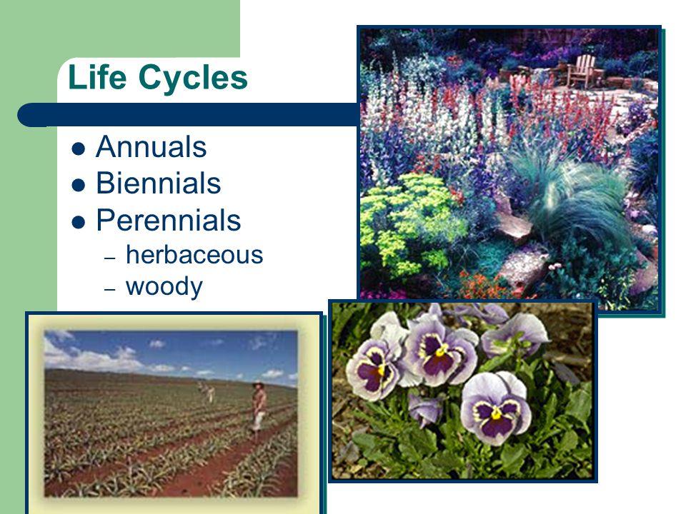 Life Cycles Annuals Biennials Perennials – herbaceous – woody