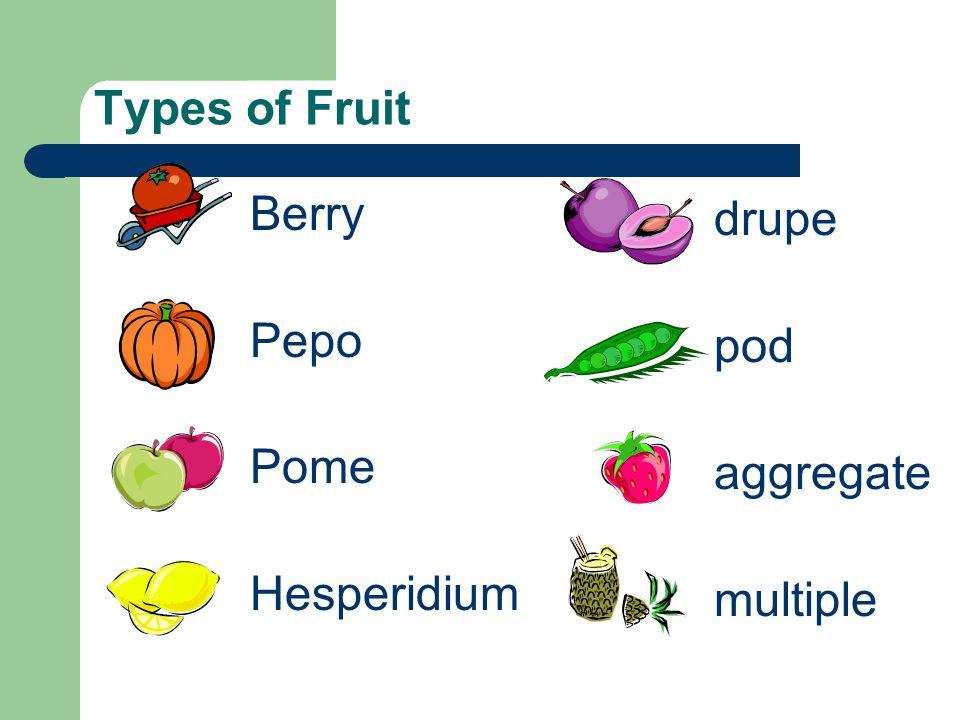 Types of Fruit Berry Pepo Pome Hesperidium drupe pod aggregate multiple