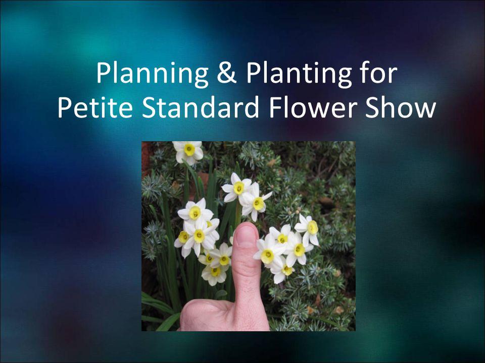Planning & Planting for Petite Standard Flower Show