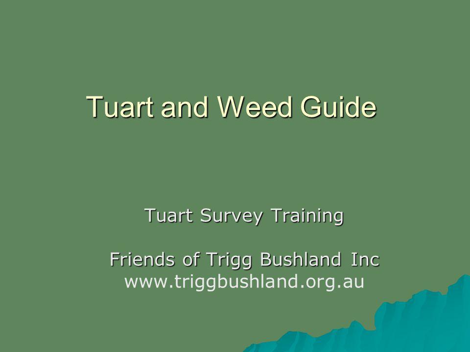 Tuart and Weed Guide Tuart Survey Training Friends of Trigg Bushland Inc www.triggbushland.org.au