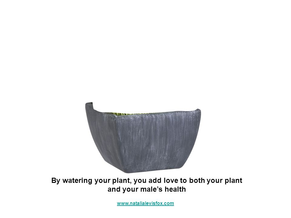 By watering your plant, you add love to both your plant and your males health