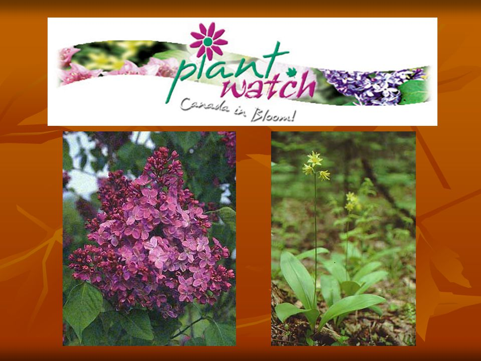 Why phenology.