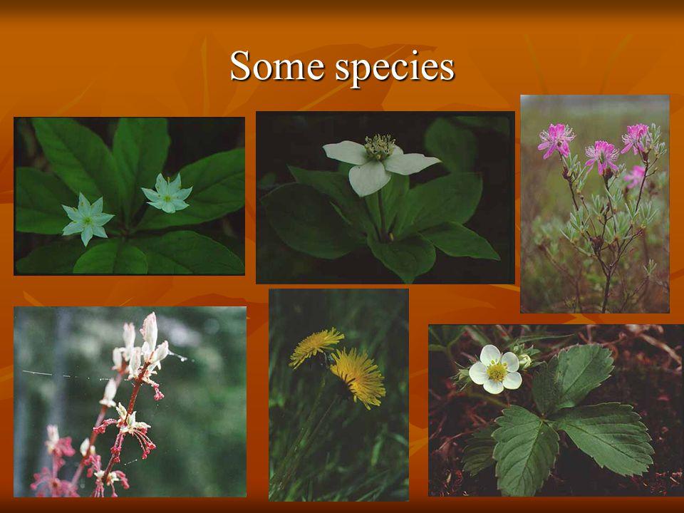 Some species
