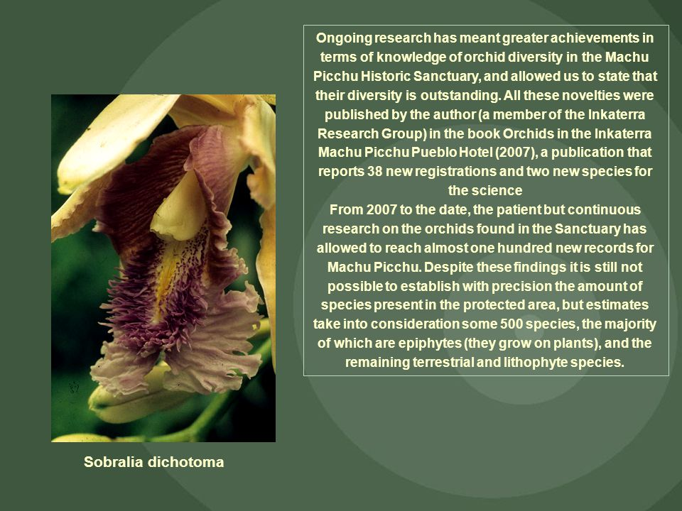 Ongoing research has meant greater achievements in terms of knowledge of orchid diversity in the Machu Picchu Historic Sanctuary, and allowed us to st