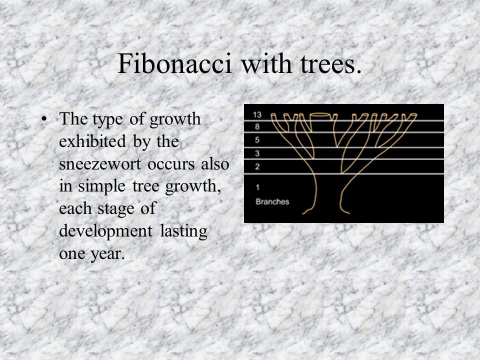 Fibonacci with trees. The type of growth exhibited by the sneezewort occurs also in simple tree growth, each stage of development lasting one year.