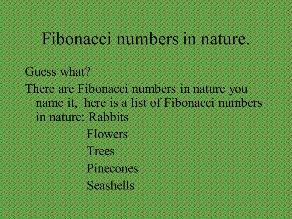 Fibonacci numbers in nature.Guess what.
