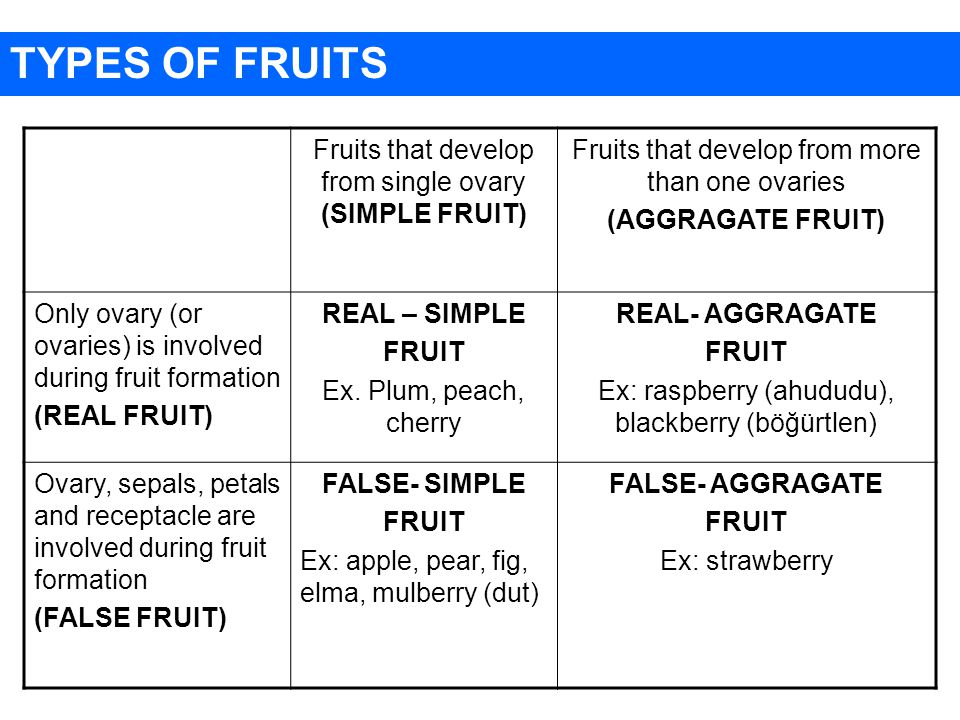 Fruits that develop from single ovary (SIMPLE FRUIT) Fruits that develop from more than one ovaries (AGGRAGATE FRUIT) Only ovary (or ovaries) is involved during fruit formation (REAL FRUIT) REAL – SIMPLE FRUIT Ex.