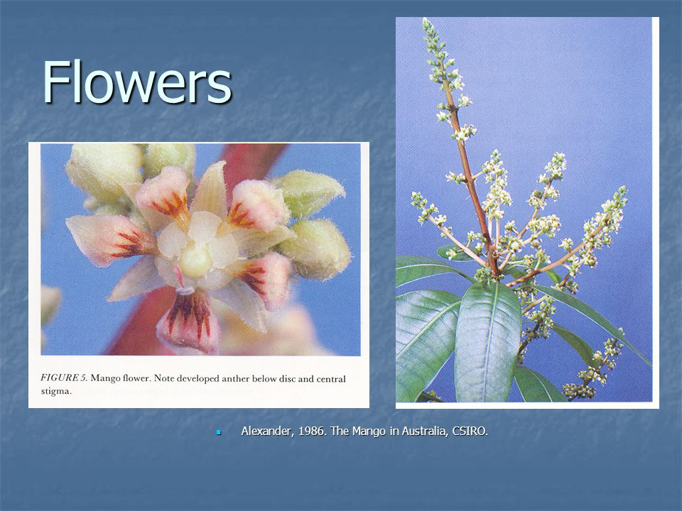 Flowers Alexander, 1986.The Mango in Australia, CSIRO.
