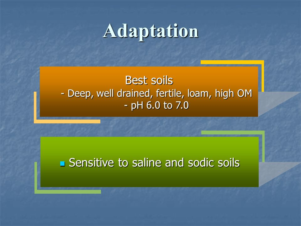 Adaptatio n Best soils - Deep, well drained, fertile, loam, high OM - pH 6.0 to 7.0 Sensitive to saline and sodic soils Sensitive to saline and sodic