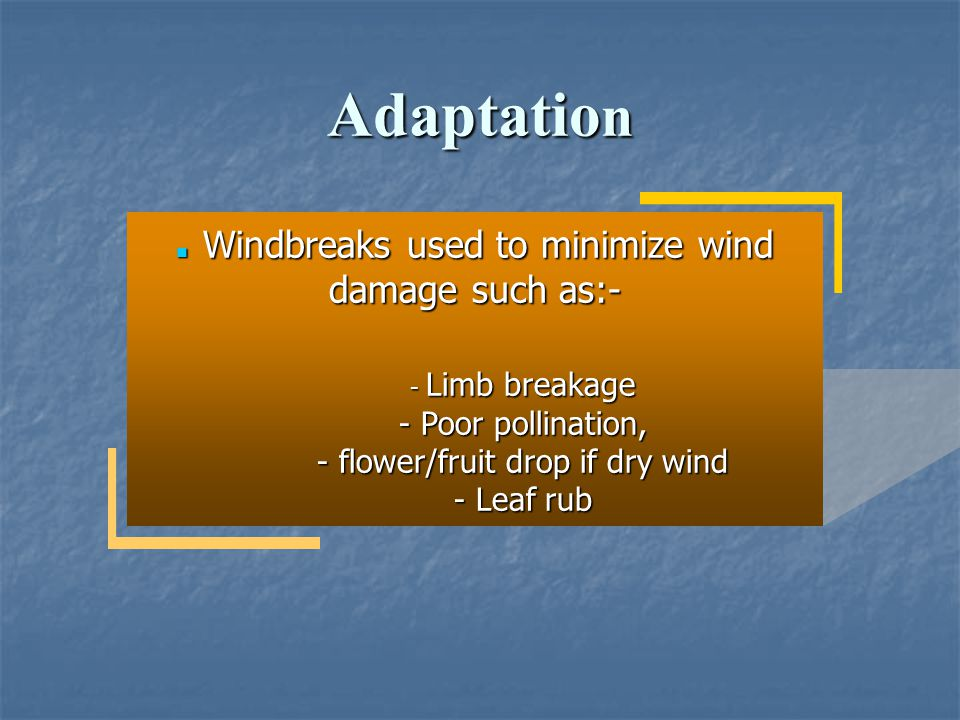 Adaptatio n Windbreaks used to minimize wind damage such as:- Windbreaks used to minimize wind damage such as:- - Limb breakage - Poor pollination, -