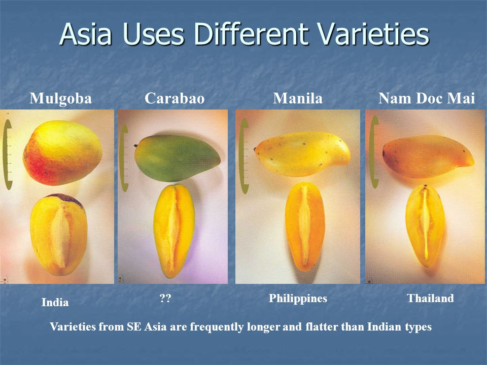Asia Uses Different Varieties CarabaoNam Doc Mai India Thailand ManilaMulgoba ??Philippines Varieties from SE Asia are frequently longer and flatter t
