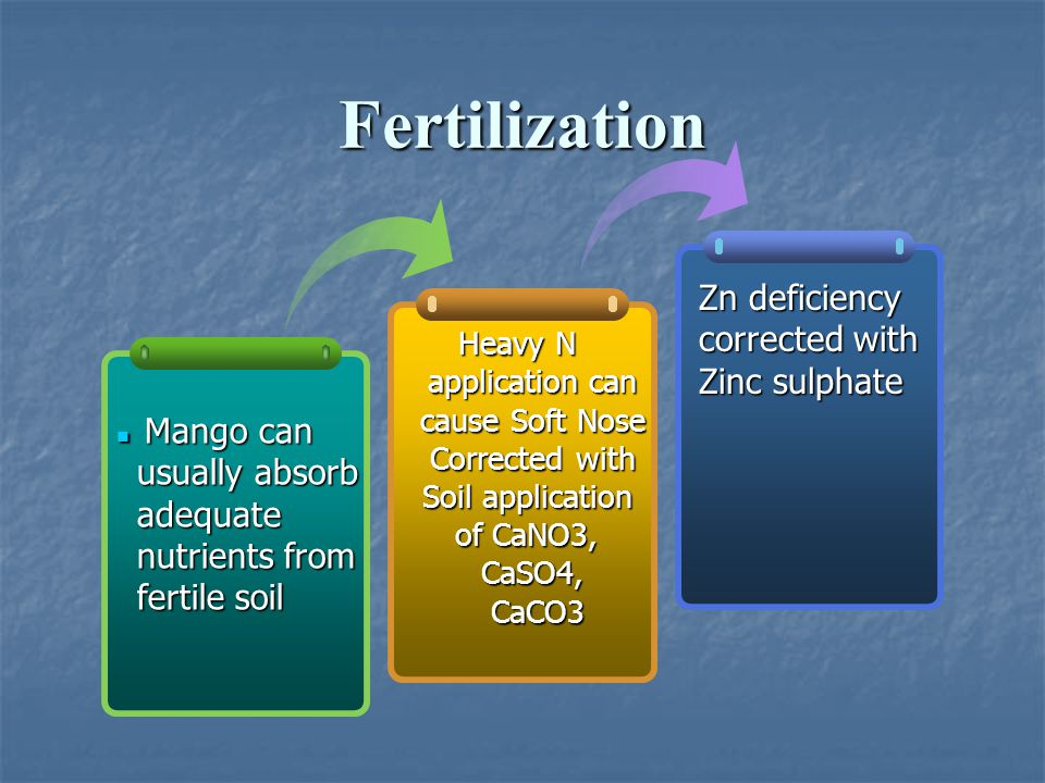 Fertilization Heavy N application can application can cause Soft Nose cause Soft Nose Corrected with Soil application of CaNO3, CaSO4, CaCO3 CaCO3 Man