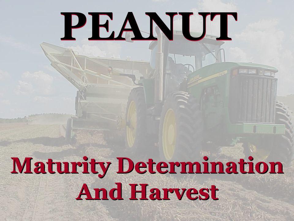 PEANUT Maturity Determination And Harvest Maturity Determination And Harvest
