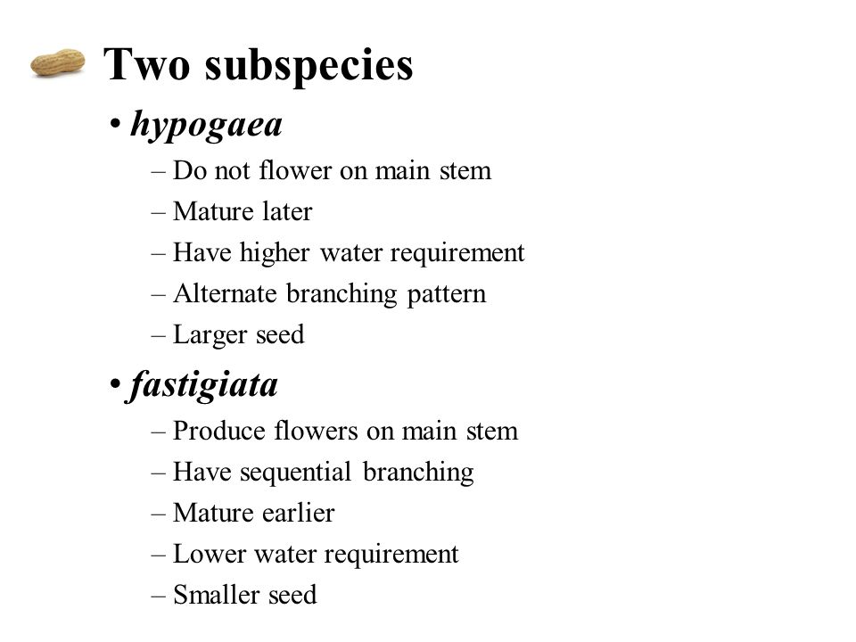 Two subspecies hypogaea –Do not flower on main stem –Mature later –Have higher water requirement –Alternate branching pattern –Larger seed fastigiata –Produce flowers on main stem –Have sequential branching –Mature earlier –Lower water requirement –Smaller seed