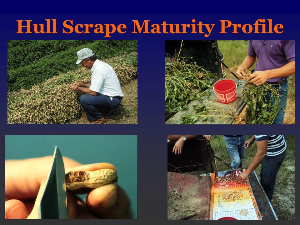 Hull Scrape Maturity Profile