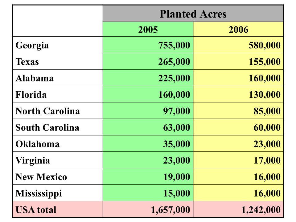 Planted Acres 20052006 Georgia755,000580,000 Texas265,000155,000 Alabama225,000160,000 Florida160,000130,000 North Carolina97,00085,000 South Carolina