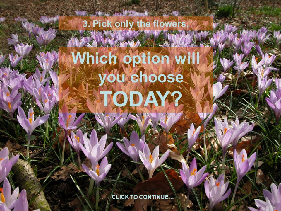 3. Pick only the flowers. Which option will you choose TODAY CLICK TO CONTINUE…