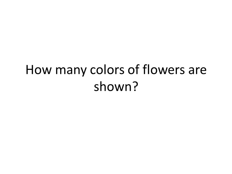 How many colors of flowers are shown