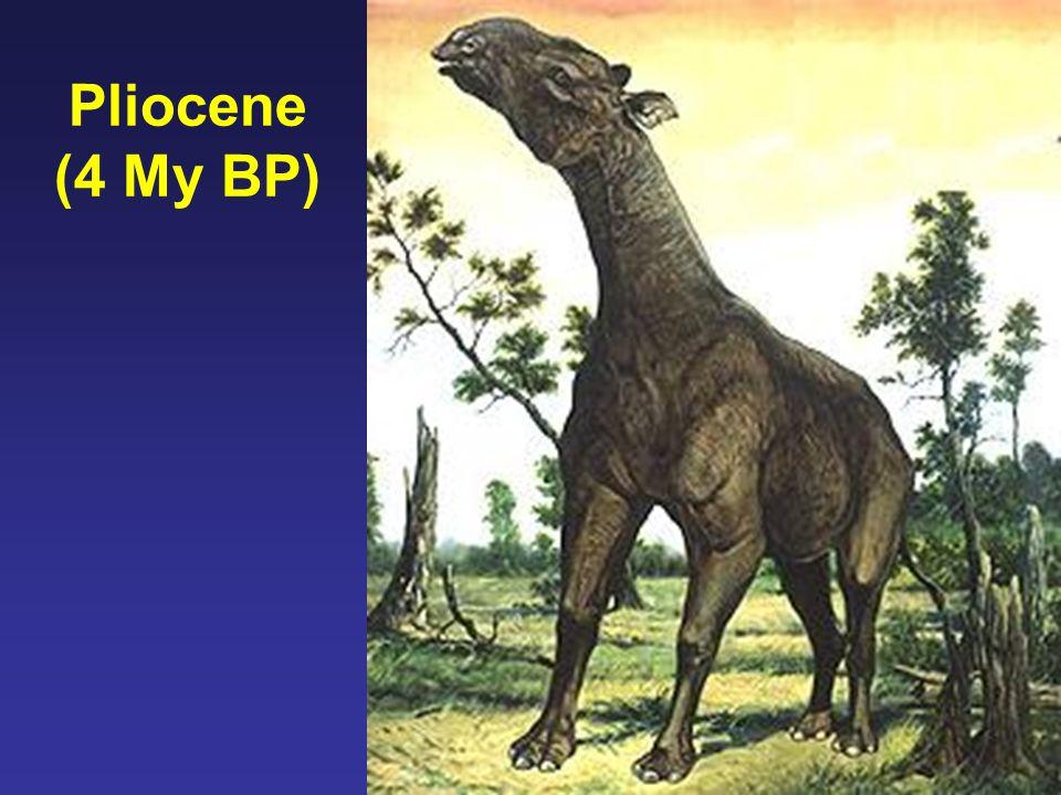 Pliocene (4 My BP)