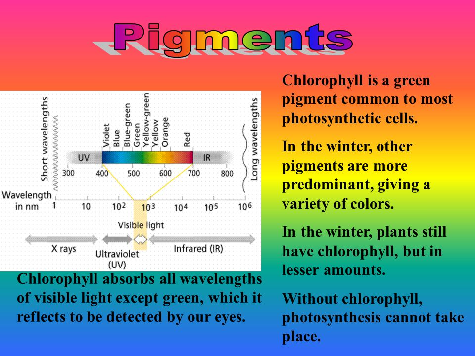Photosynthesis occurs in leaves. Cells in leaves have chloroplasts.