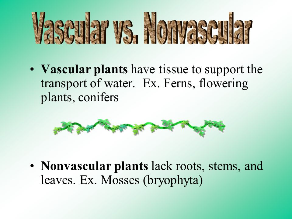 Vascular plants have tissue to support the transport of water.