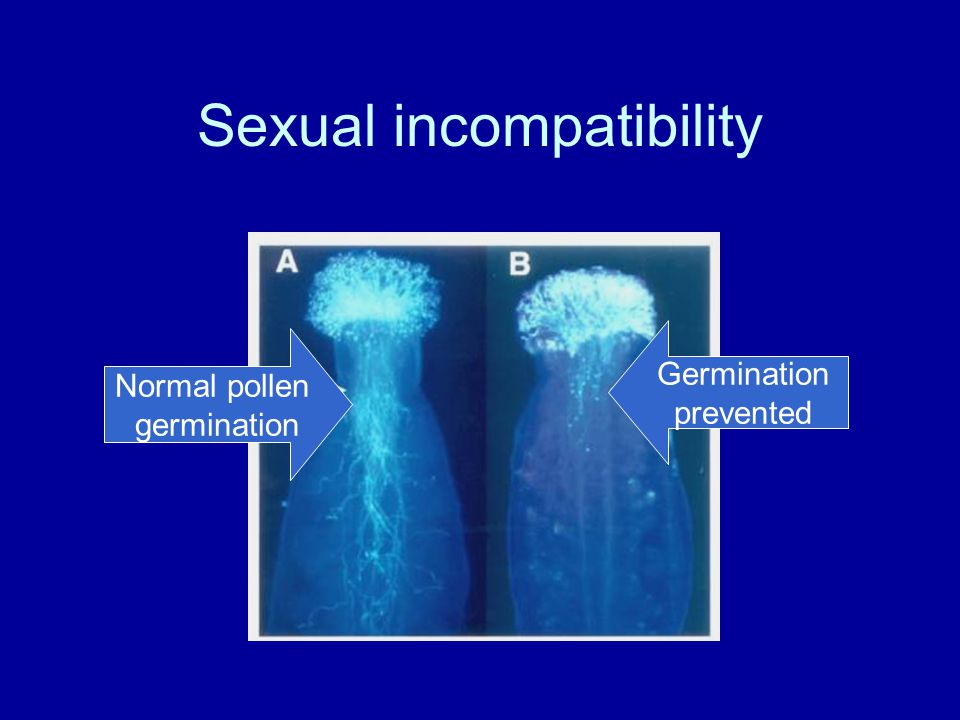 Sexual incompatibility Normal pollen germination Germination prevented