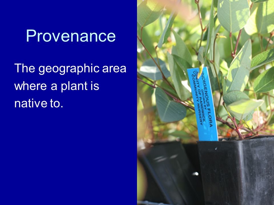 Provenance The geographic area where a plant is native to.