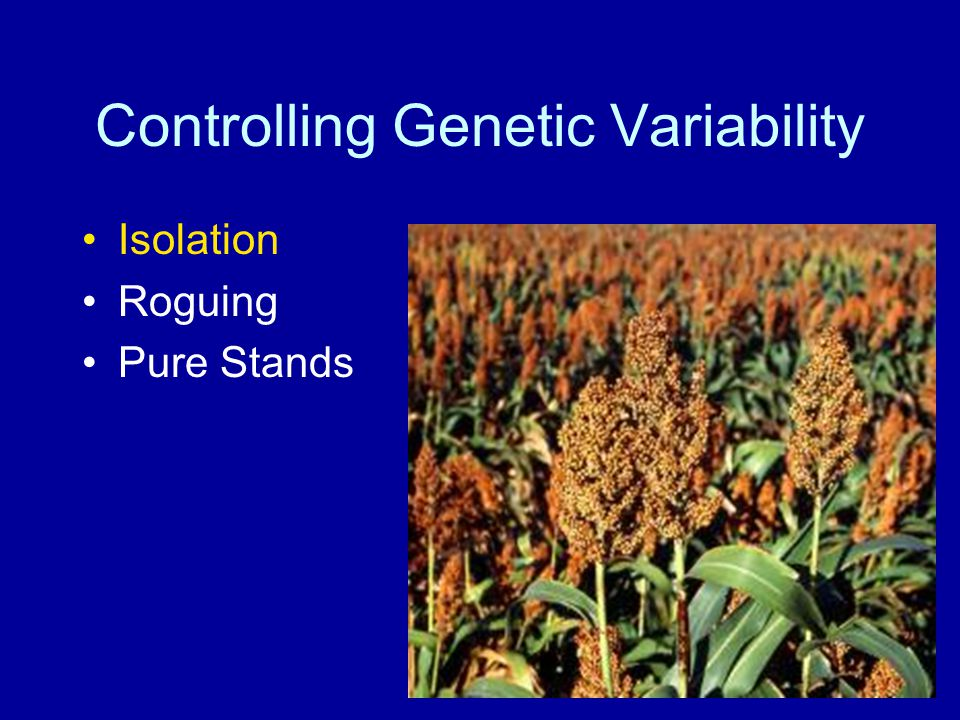Controlling Genetic Variability Isolation Roguing Pure Stands