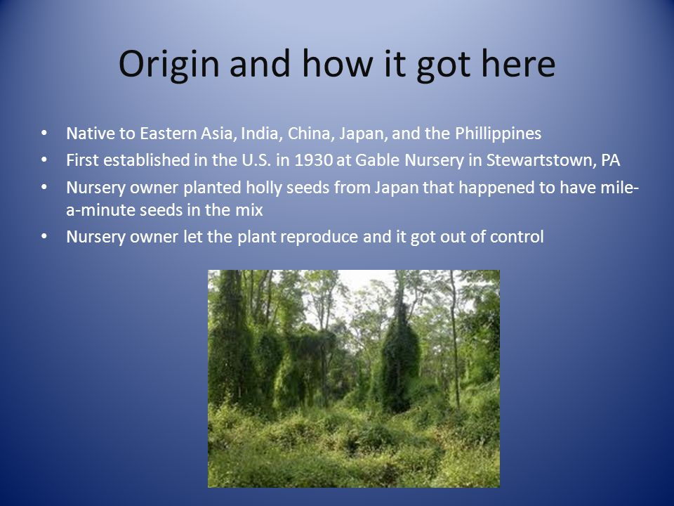 Origin and how it got here Native to Eastern Asia, India, China, Japan, and the Phillippines First established in the U.S.