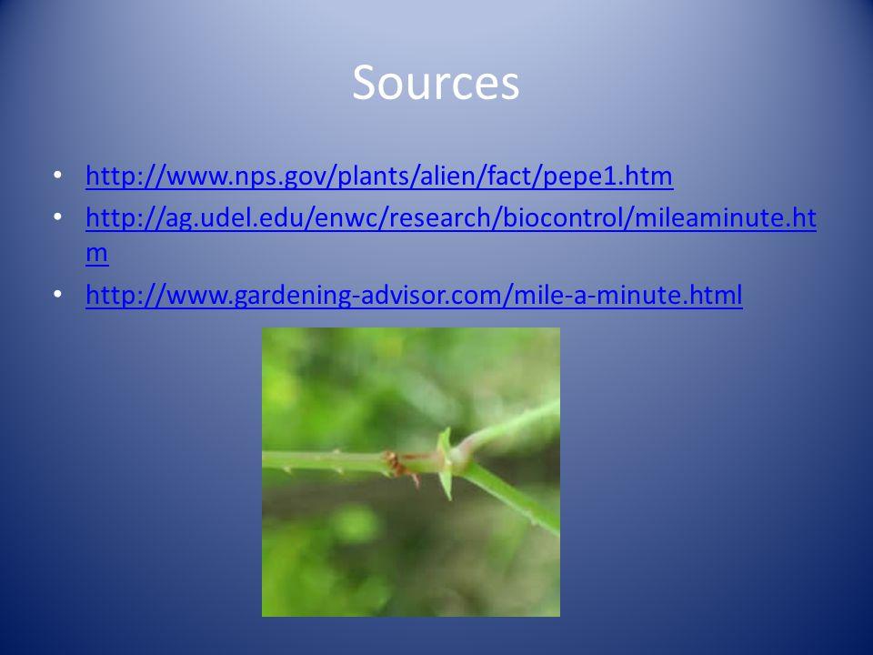 Sources http://www.nps.gov/plants/alien/fact/pepe1.htm http://ag.udel.edu/enwc/research/biocontrol/mileaminute.ht m http://ag.udel.edu/enwc/research/biocontrol/mileaminute.ht m http://www.gardening-advisor.com/mile-a-minute.html