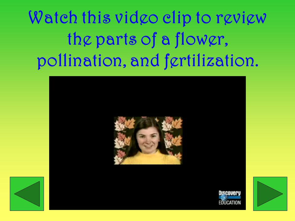 Watch fertilization in action! http://www.ashfieldgirls.org/science/plant_reproduction/fertilisation.htm