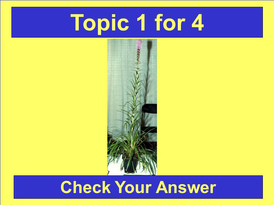 Answer: Alstromeria Back to the Game Board Topic 2 for 4