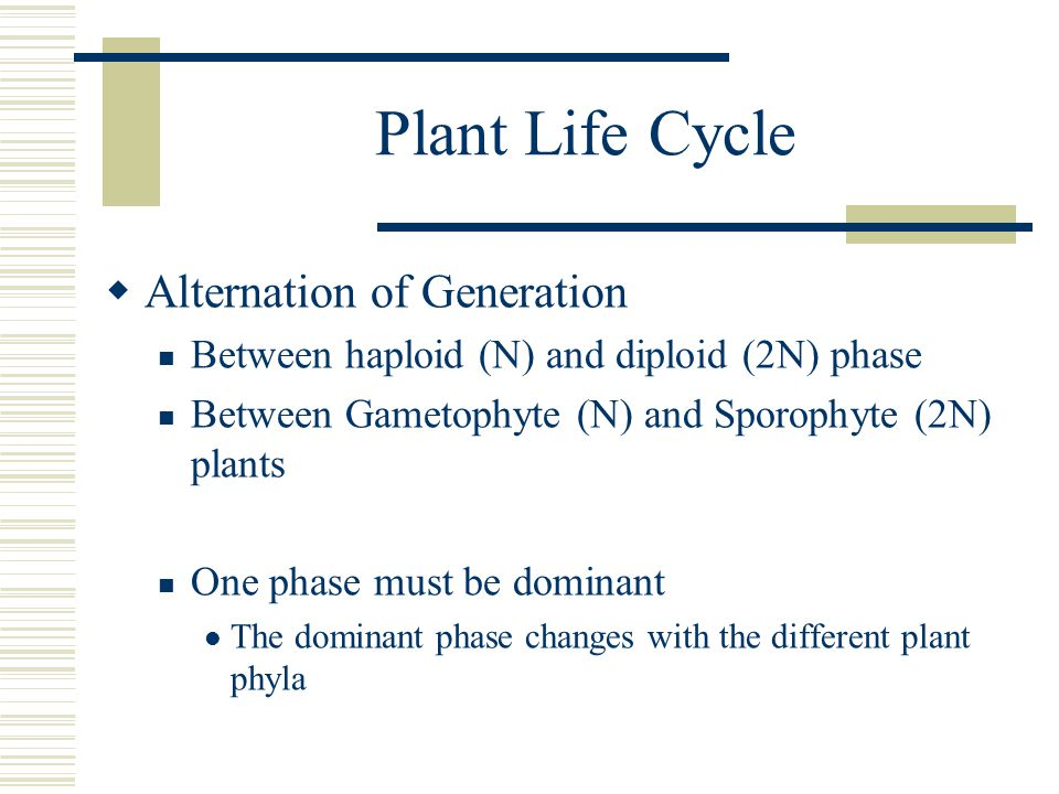 Plant Life Cycle Alternation of Generation Between haploid (N) and diploid (2N) phase Between Gametophyte (N) and Sporophyte (2N) plants One phase mus