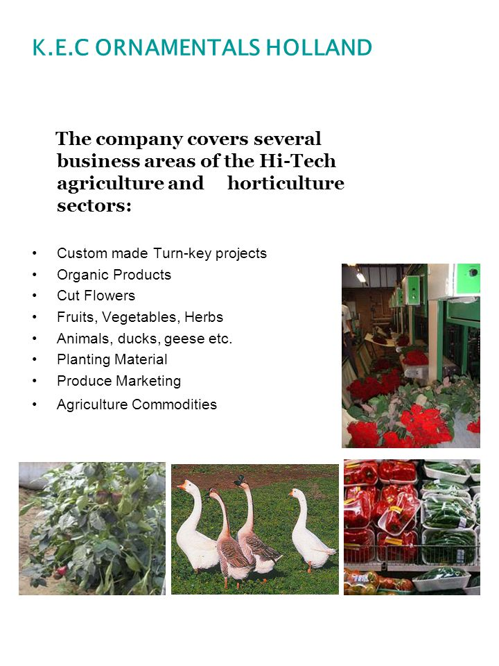 The company covers several business areas of the Hi-Tech agriculture and horticulture sectors: Custom made Turn-key projects Organic Products Cut Flowers Fruits, Vegetables, Herbs Animals, ducks, geese etc.
